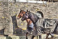 Paarden in de wei Beerta, Oldambt