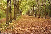 Herfst Vriescheloo, Bellingwedde