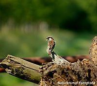 Vogel Beerta Beerta, Oldambt
