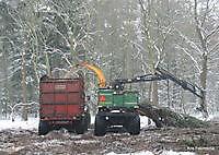 Bosbouw ter apel Ter Apel, Westerwolde