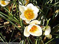 Voorjaar in aantocht Bellingwolde, Bellingwedde