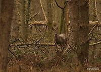 mooie stukje roelage bos ter apel Ter Apel, Westerwolde