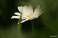bloemen Ter Apel, Westerwolde