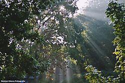 Prachtig begin van de dag Bellingwolde, Westerwolde