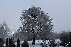 rijp Finsterwolde, Oldambt