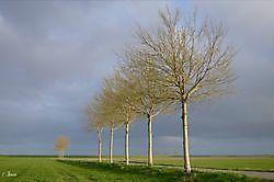 Lijnenspel in de polder Oost Groningen, Oldambt