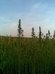 cbd mediweed Zuidbroek, Midden-Groningen
