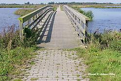Dannenmeer Sellingen, Westerwolde