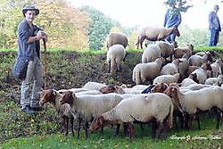 Schapenherder met kudde op de vestingwallen in Bourtange Sellingen, Westerwolde