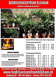 We hebben weer nieuwe Palmbomen binnen gekregen Blijham, Westerwolde