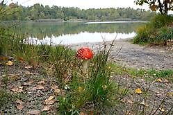herfst Sellingen, Westerwolde