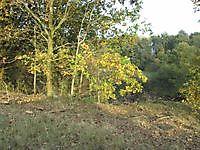 Natuurgebied De Gaast Bellingwolde